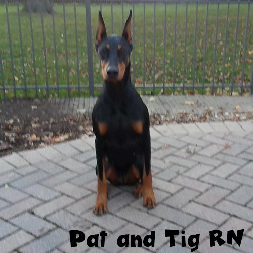 Pat and Tig RN