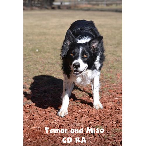 Tamar and Miso RA CD