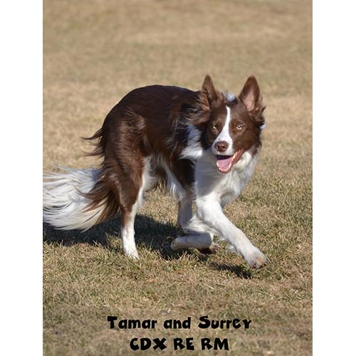 Tamar and Surrey CDX RAE RM