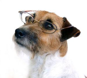 thinking-dog